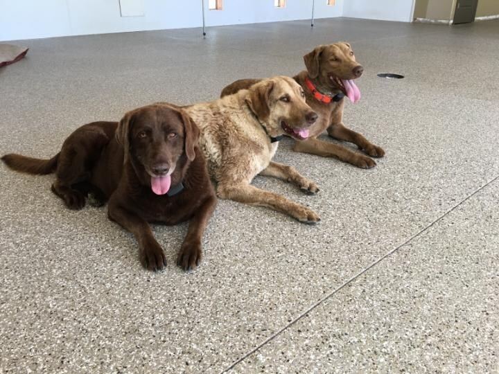 Three dogs sitting on epoxy floor