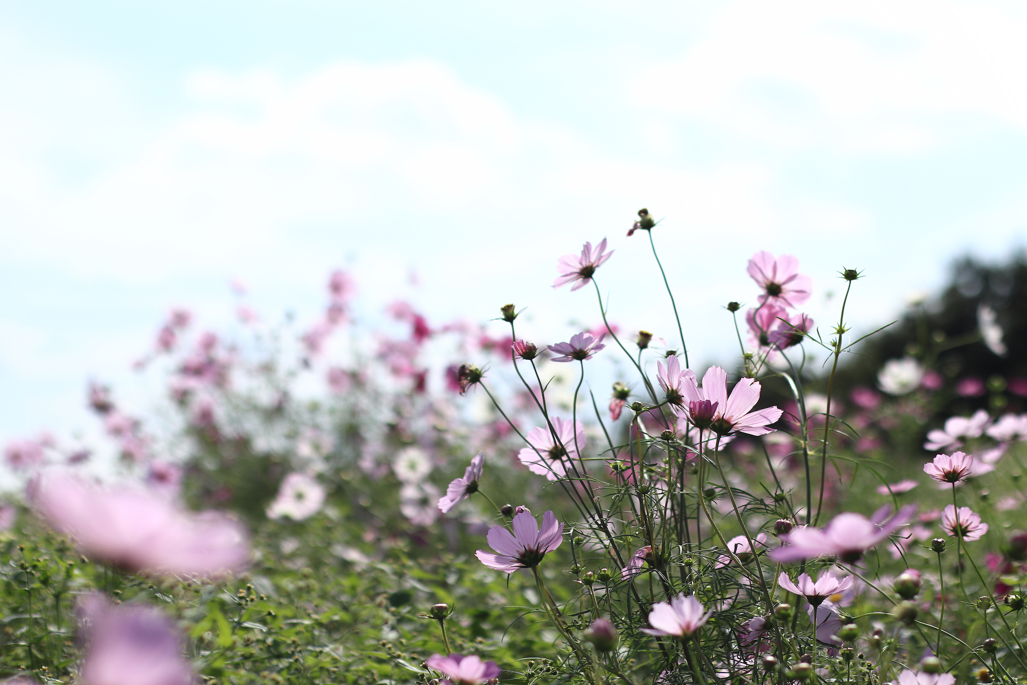 Fresh flowers in spring