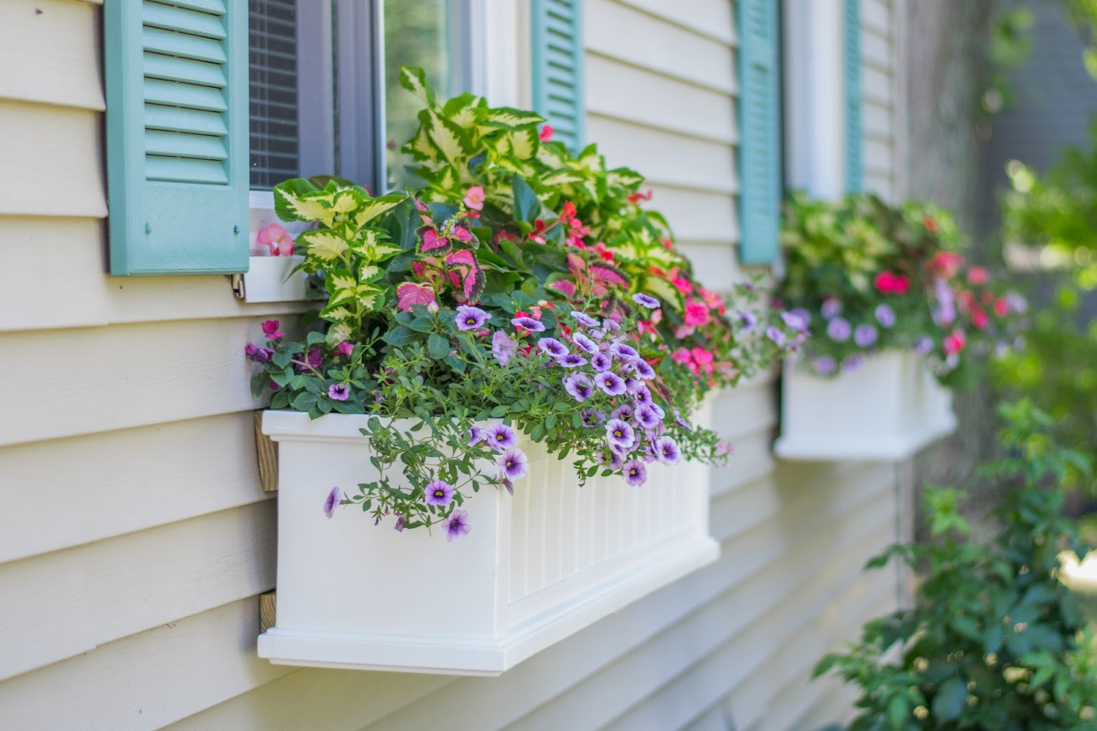 Flowers in a home exterior window in Raleigh